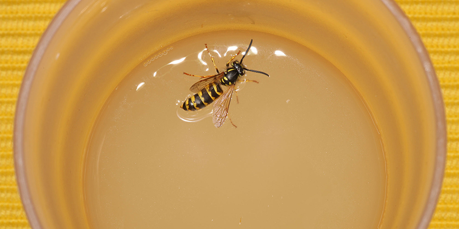 Wasp in a cup