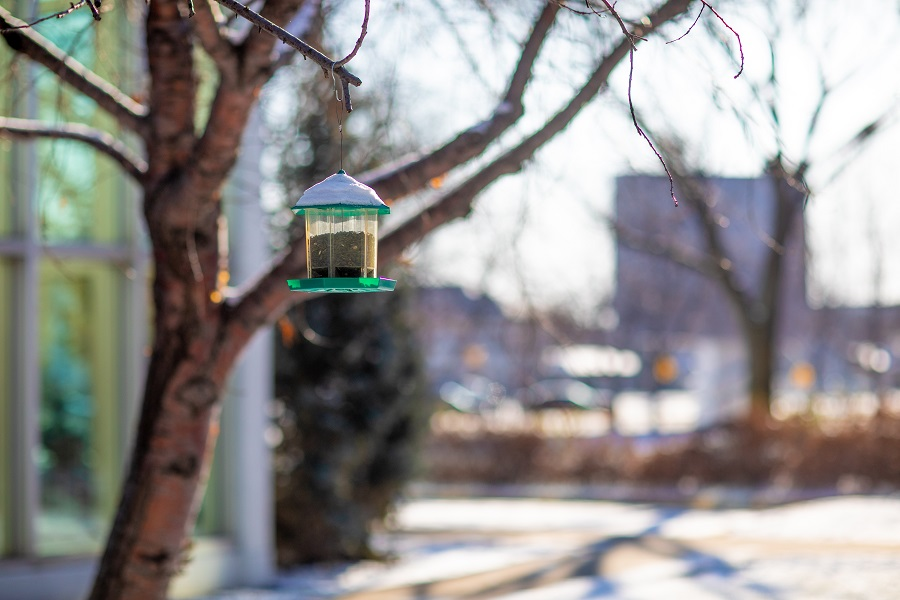 bird feeder with platform