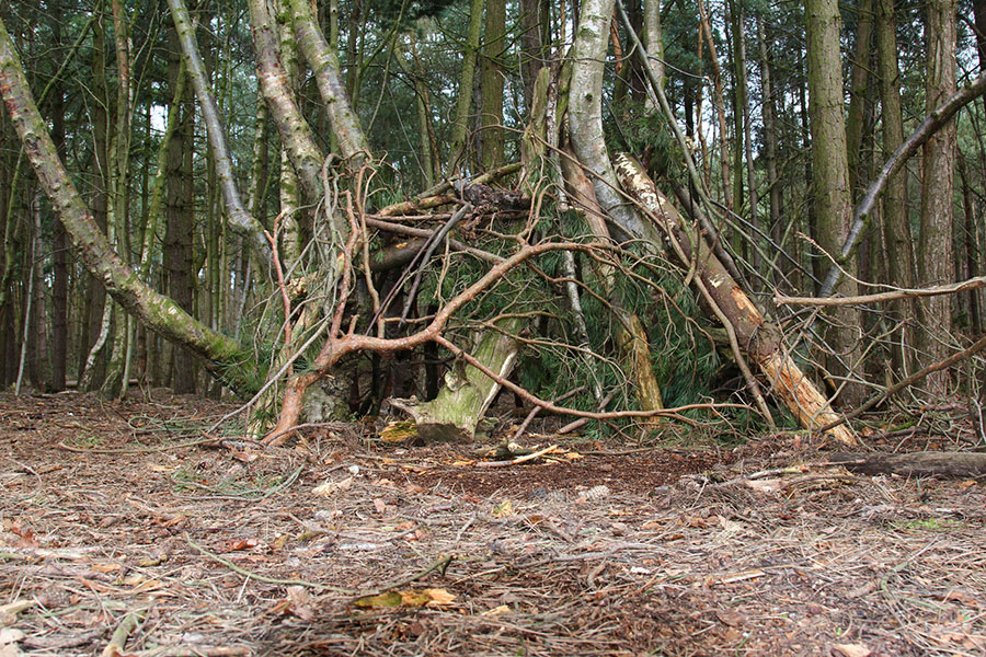 survival shelter in forest