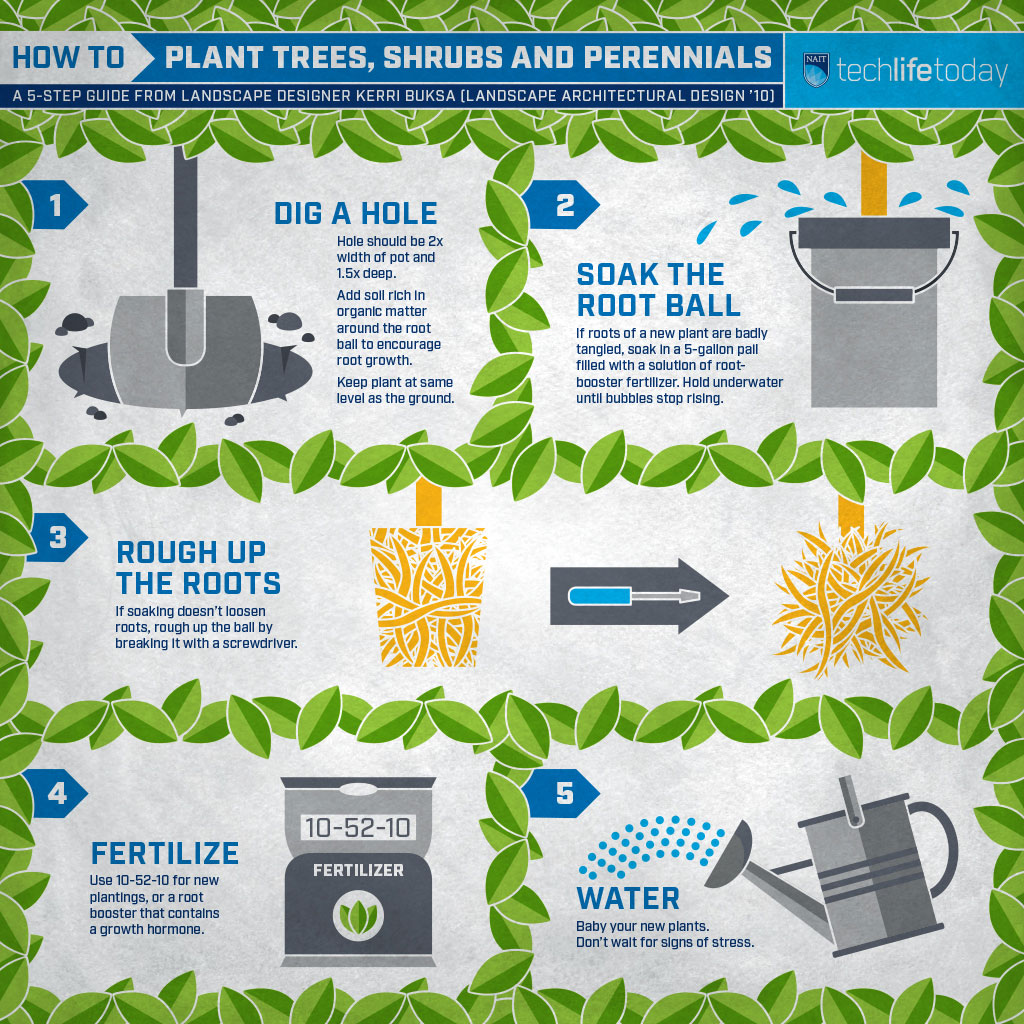 how to plant trees and shrubs