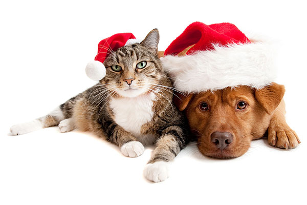 holiday pet safety, nait